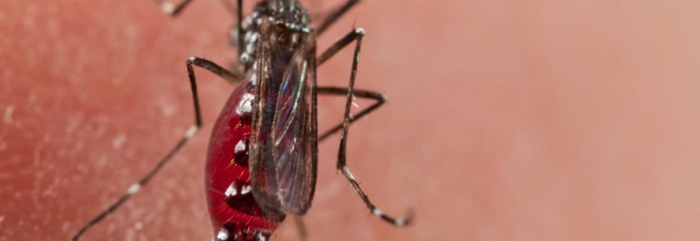Some mosquitoes can carry the Zika virus