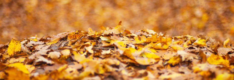 Pile of leaves.