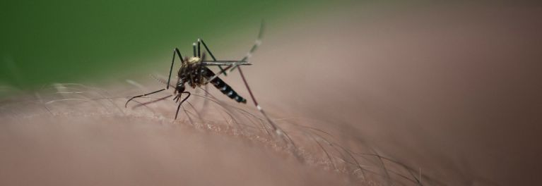 A mosquito on an arm could spread the Zika virus.