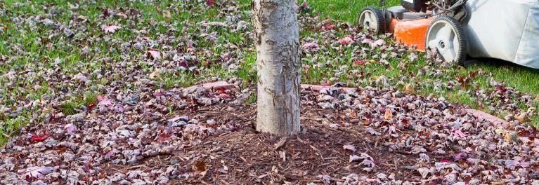 A tree trunk surrounded by leaves.