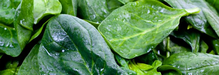 Washed spinach. Spinach is a potassium rich food.
