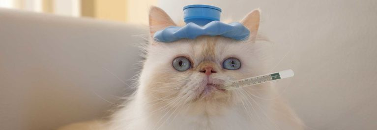 A cat with a thermometer in its mouth. Learn what is making your cat sneeze.