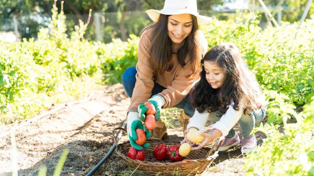 Easy Tips to Grow Your Best Garden