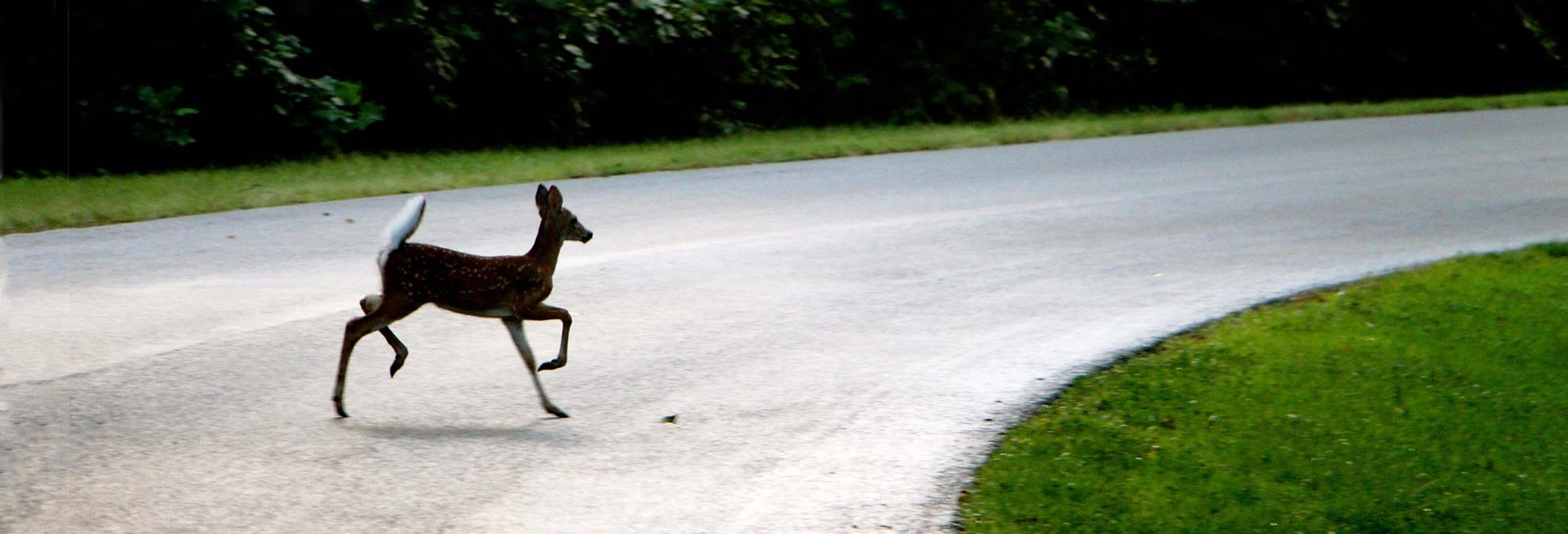 How to Avoid Collisions With Deer This Fall - Consumer Reports