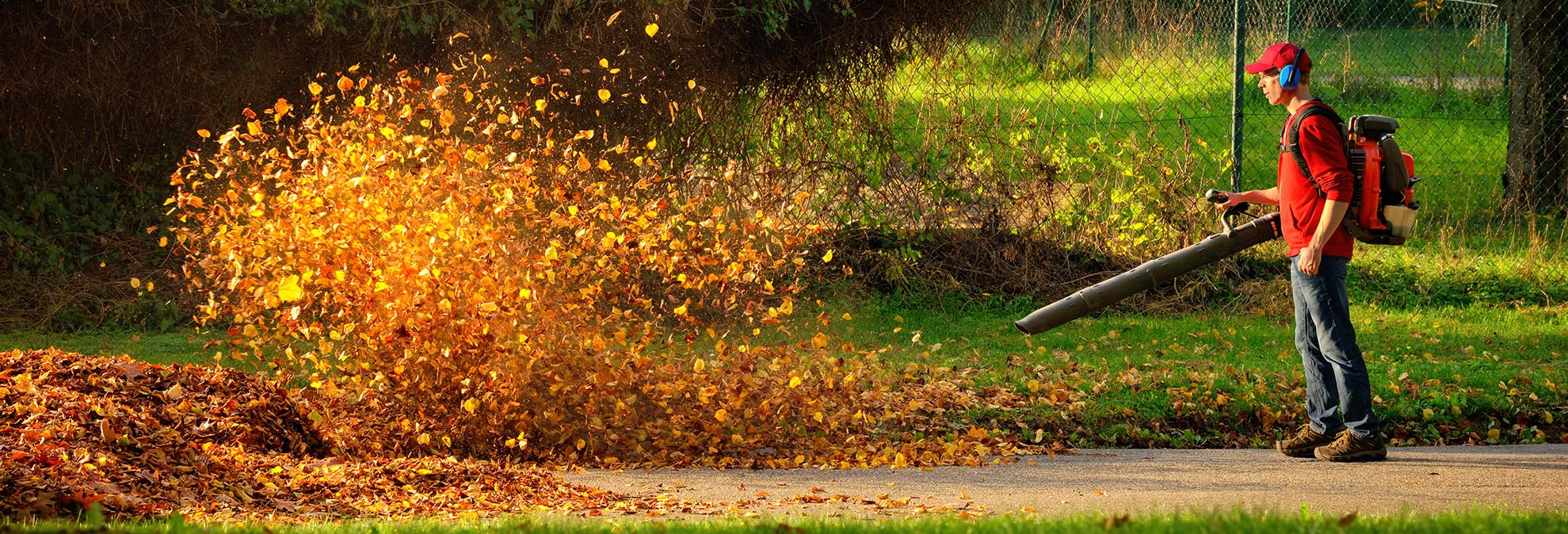 Complete Guide to Fall Yard Care