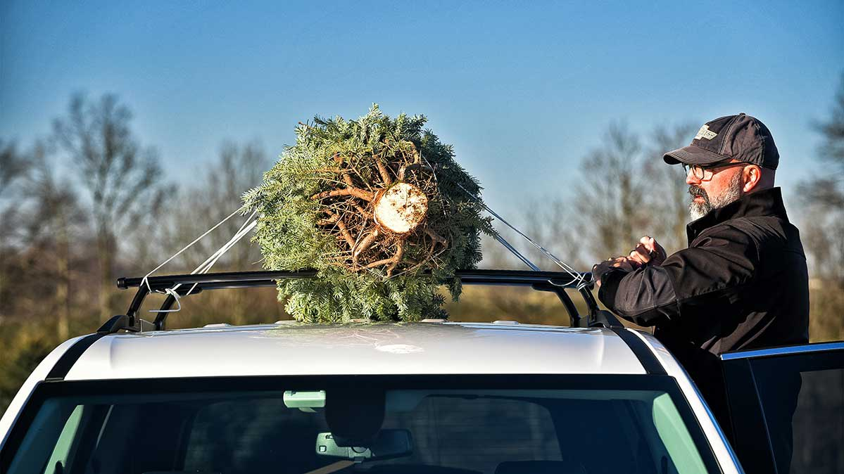 A man tying a Christmas tree to the roof rack of a vehicle