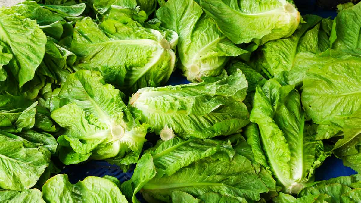 Why It S So Tough To Avoid Romaine Lettuce Consumer Reports