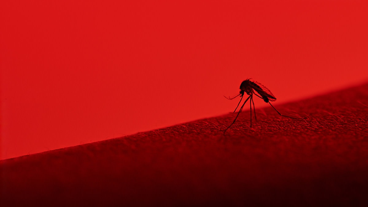 Incredible What You Need To Know About Dengue Fever Consumer Reports Ibusinesslaw Wood Chair Design Ideas Ibusinesslaworg