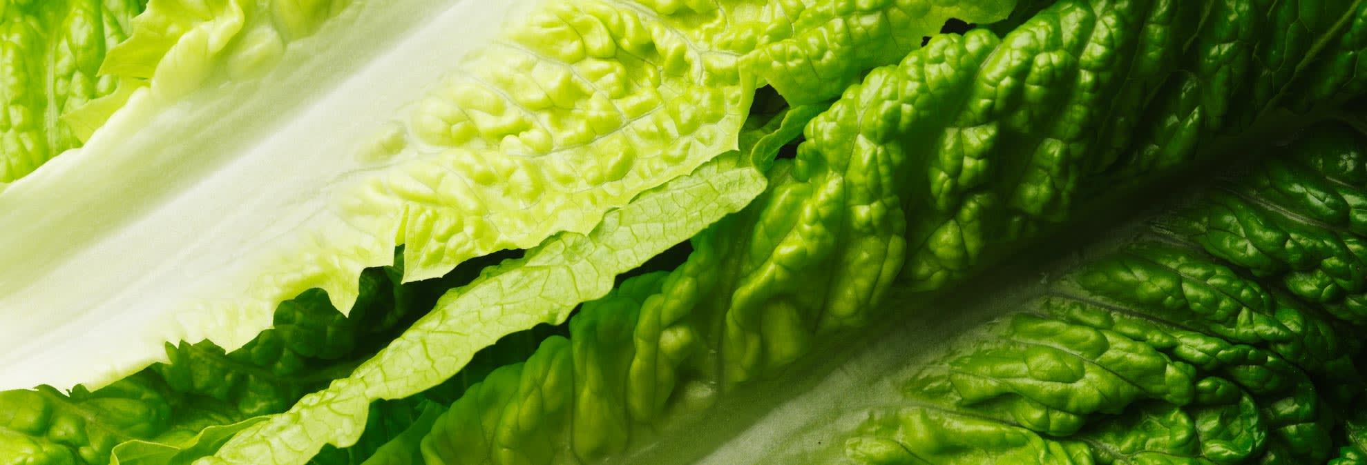 Avoid Romaine Lettuce For Now Consumer Reports Says