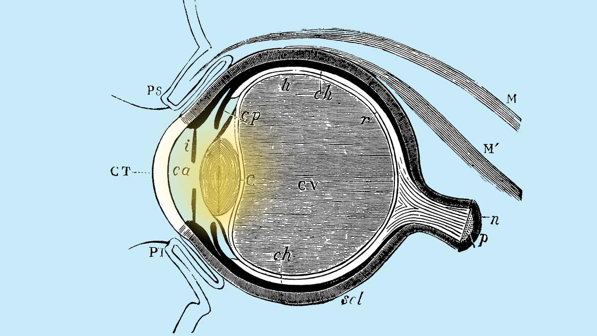 Illustration of the human eye.