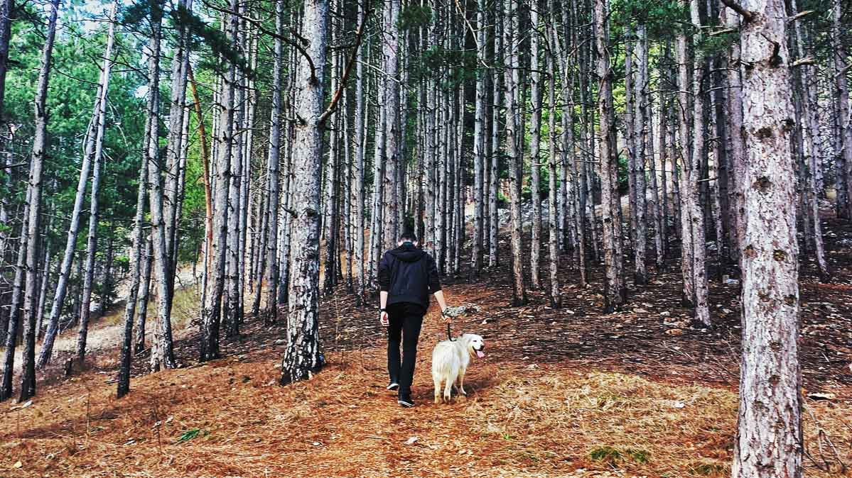 A person walks a dog in the woods.