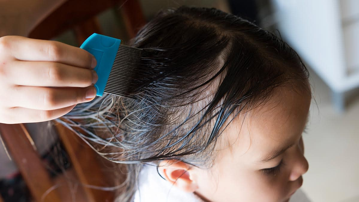 A young girl has her hair inspected with a comb for lice.