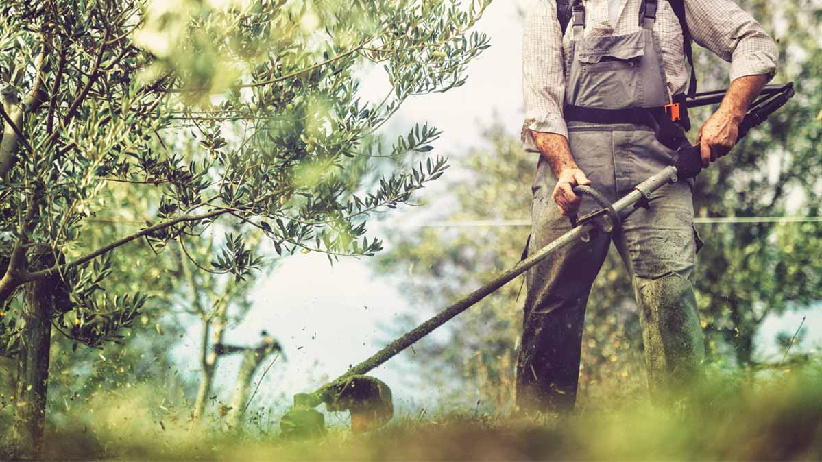 Best String Trimmers of 2019 - Consumer Reports