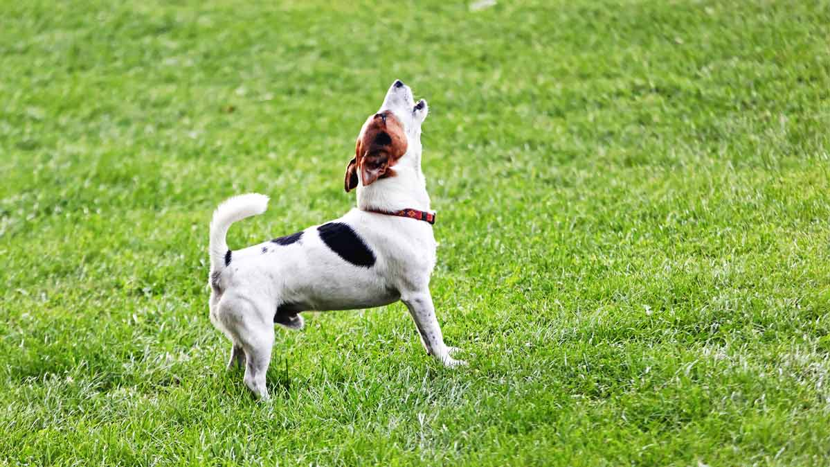 What to Do About a Neighbor's Barking Dog - Consumer Reports