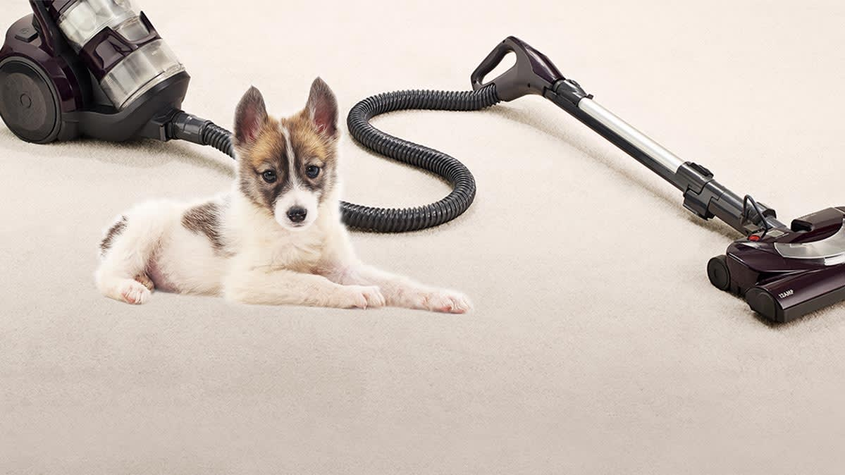 Best Vacuums For Pet Hair Consumer