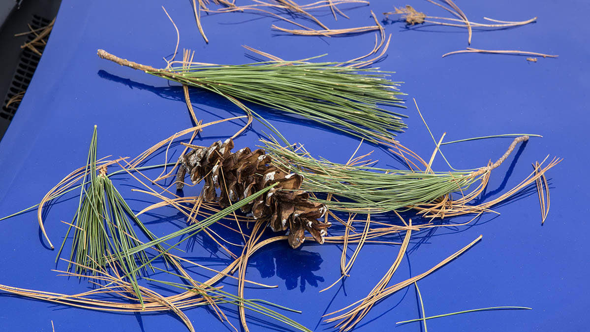 How to Get Tree Sap and Bugs Off Your Car - Consumer Reports