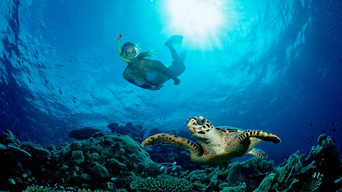 A woman snorkeling in the ocean with a sea turtle