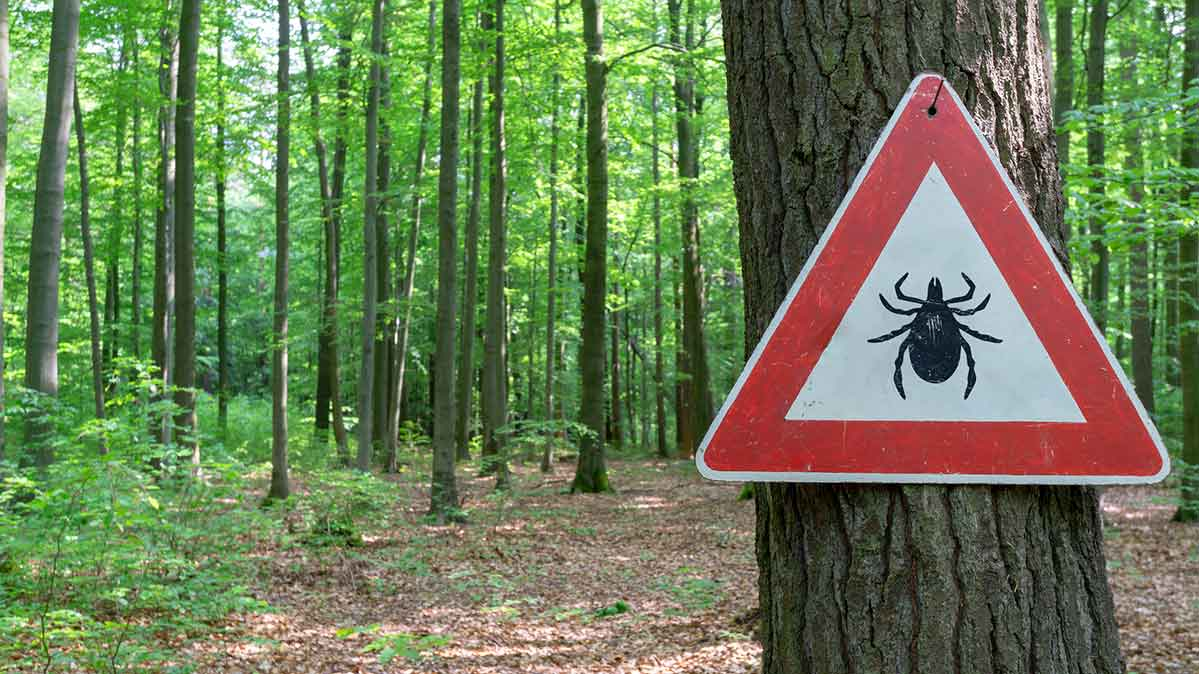 A photograph of a sign warning about ticks in the forest.