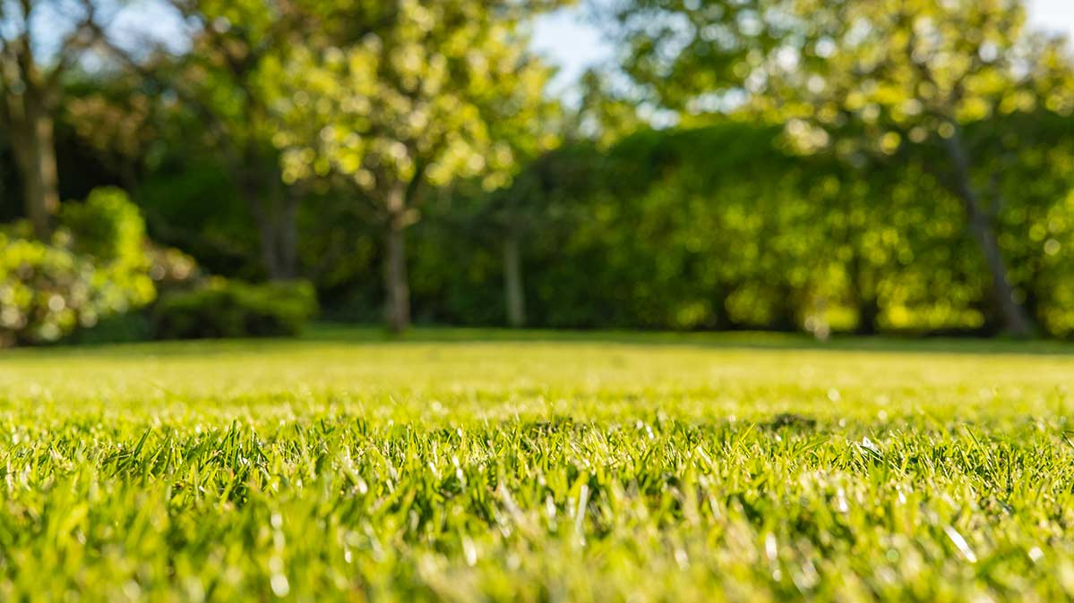 A photograph of a newly mown lawn.
