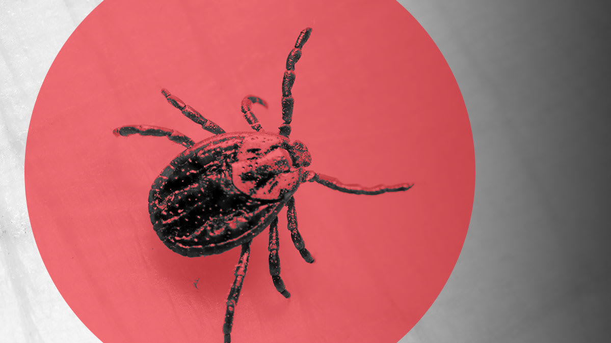 An illustration of a tick, close up.