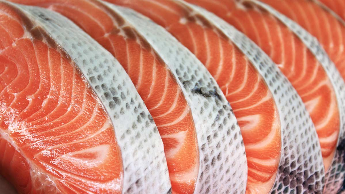Rows of salmon steaks.
