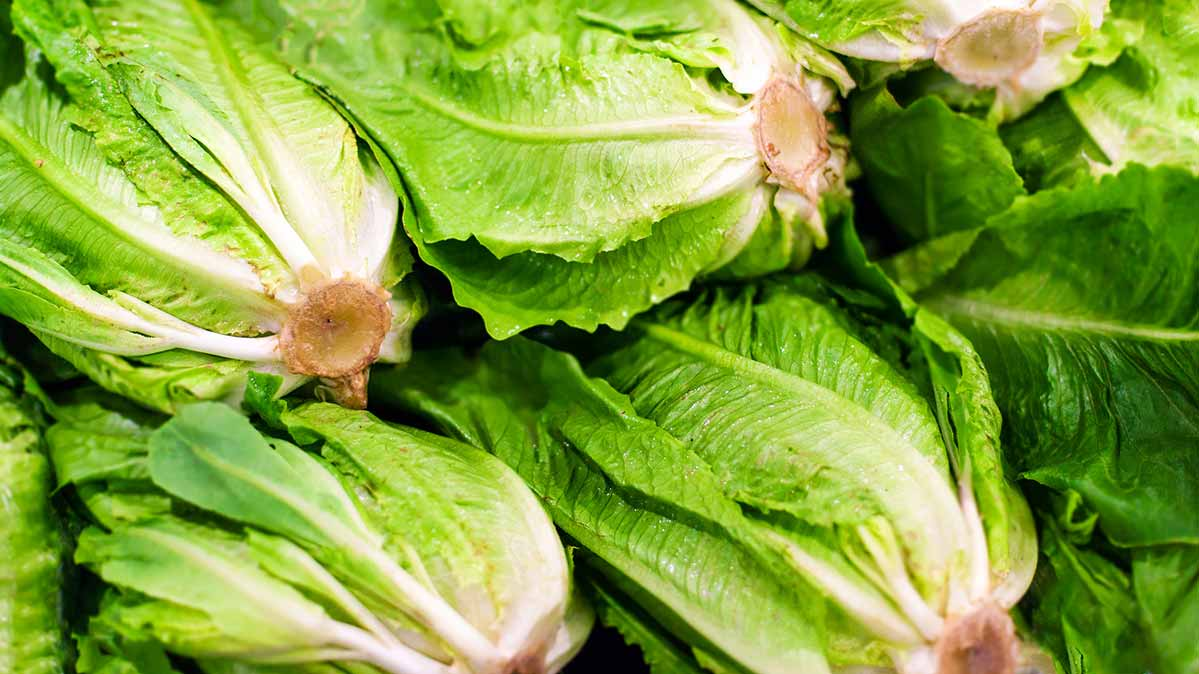Romaine Lettuce from Salinas Area Could Lead to E. coli