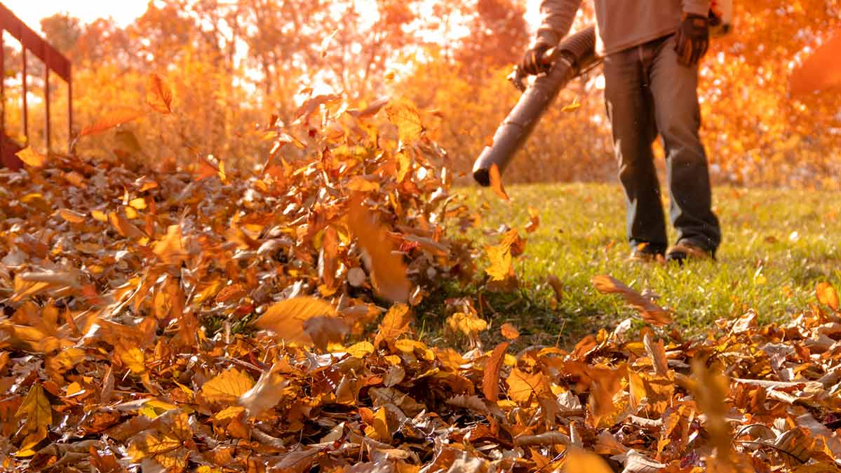 Best and Worst Leaf Blowers From Consumer Reports' Tests