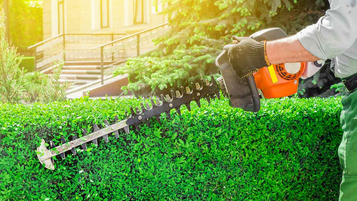 A lawn care service worker using a hedge trimmer.