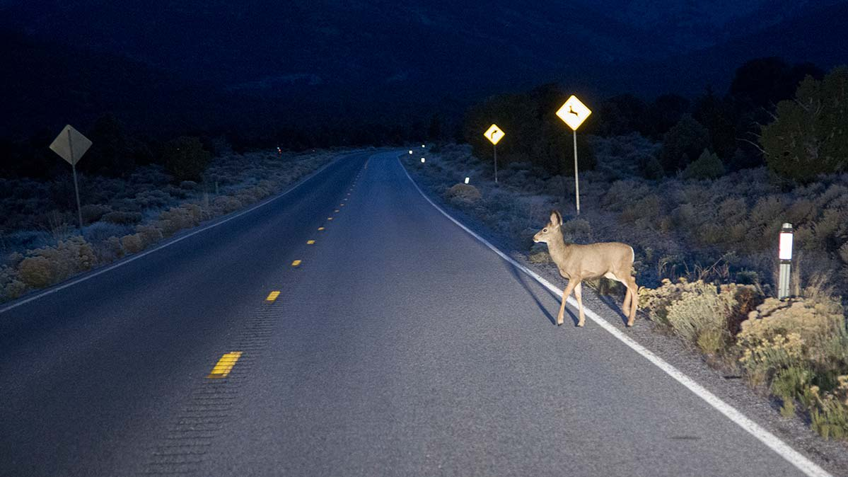 A deer illuminated by car headlights crossing a two-lane road at night