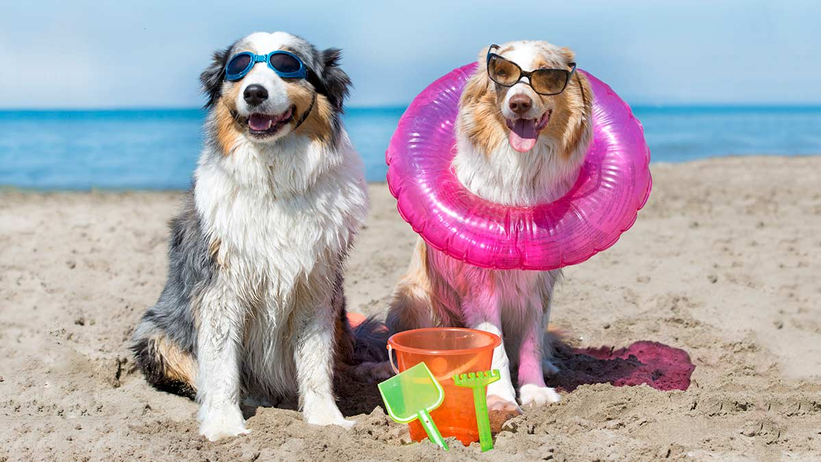 Cost of Taking a Vacation With Your Dog - Consumer Reports