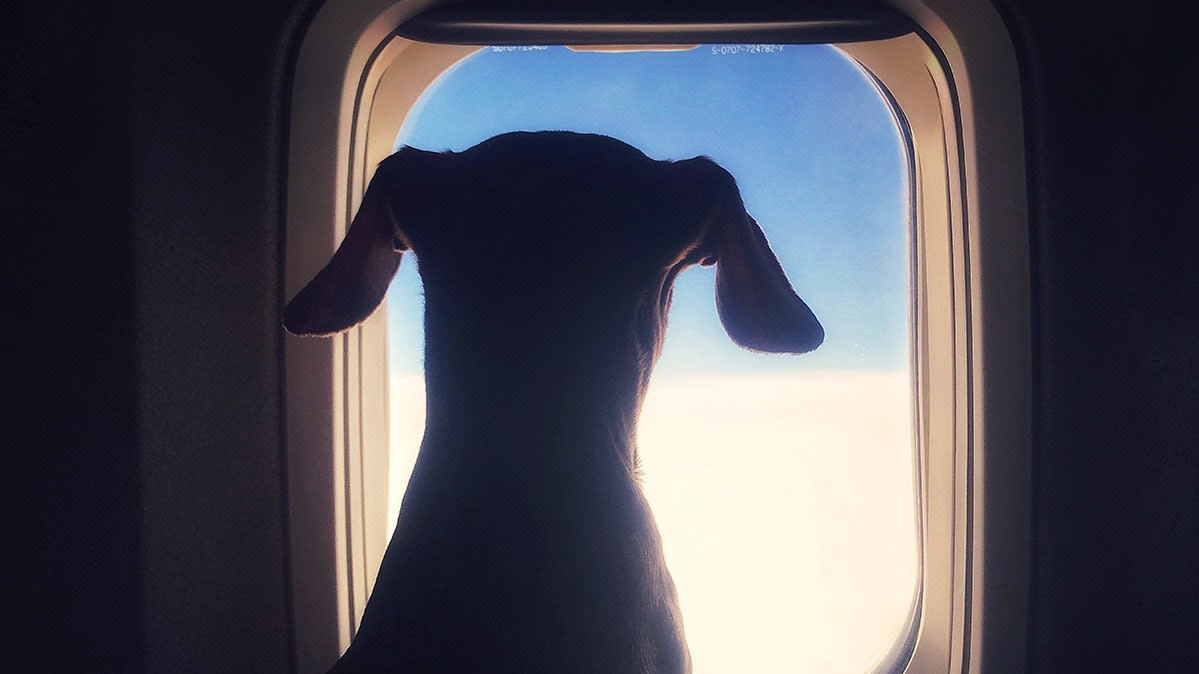 The New Rules of Flying With Your Pet - Consumer Reports