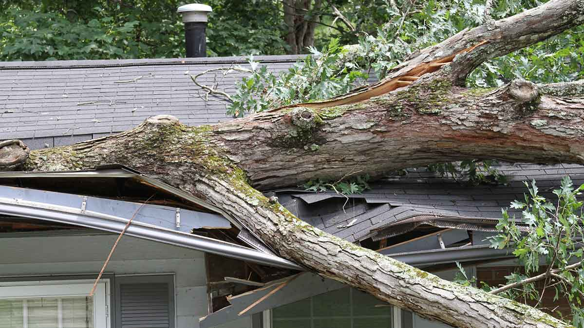 A fallen tree on the roof of a house.