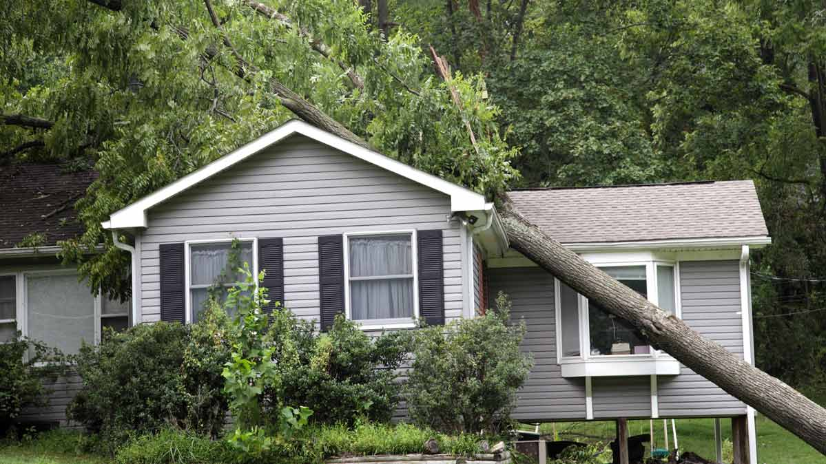 A tree falling on a suburban house.