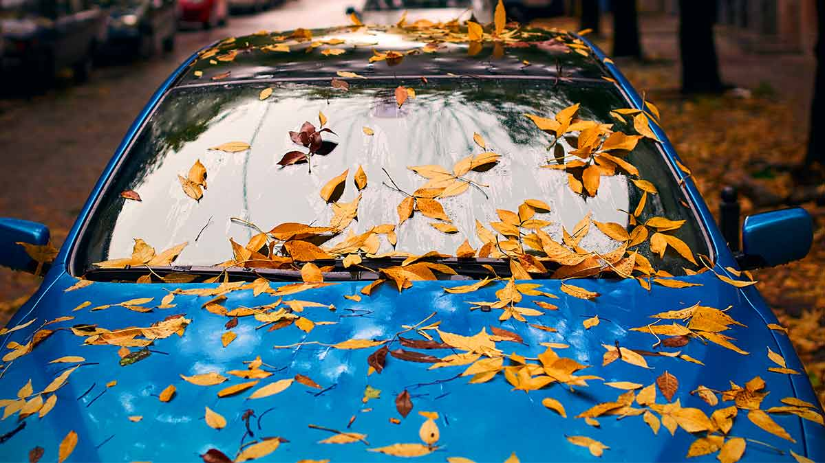 Falling leaves covering a parked blue car