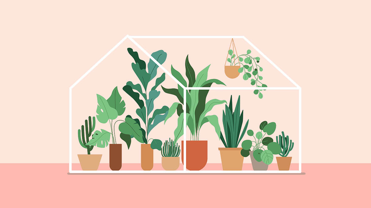 Illustration of indoor plants, which can soothe stress by exposing you to nature.