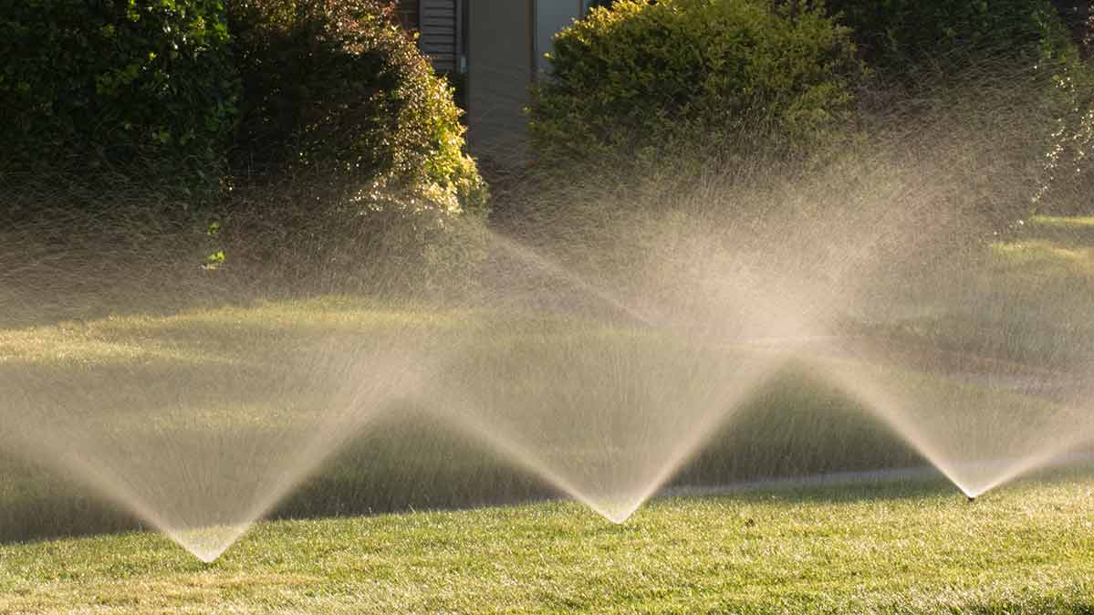 Sprinklers running on a lawn.