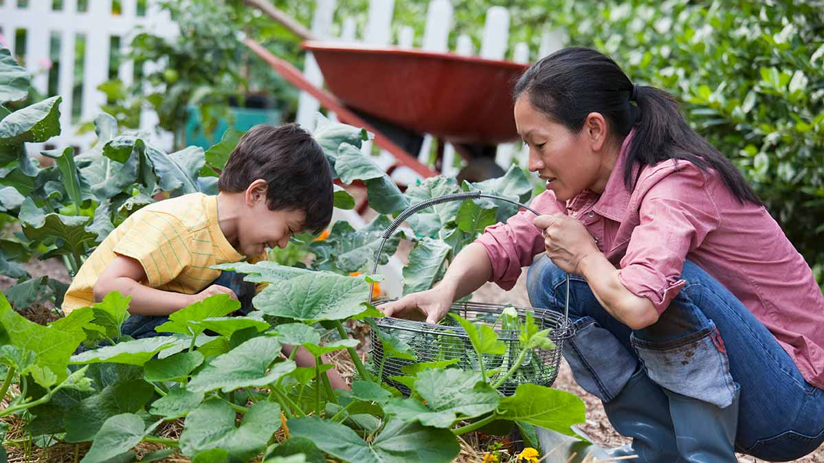 A woman and child squatting to pick vegetables in a garden.