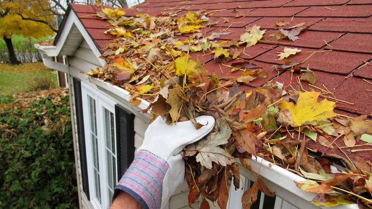 Gloved hand taking autumn leaves off a red shingled roof.