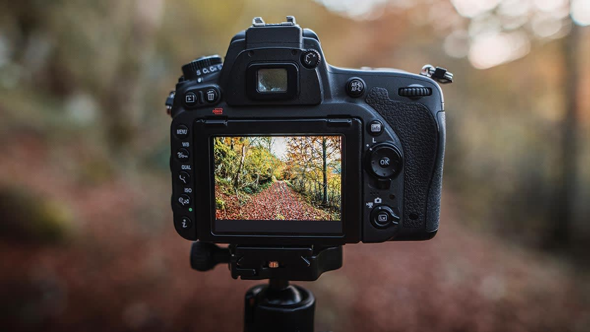 A digital camera viewfinder shows a forest