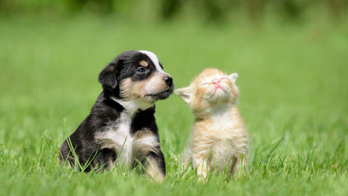 A puppy and a kitten sitting next to each other on a lawn