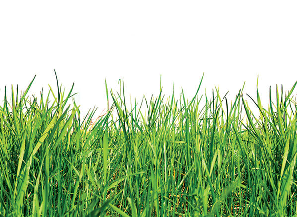 The Low-Impact But Still Lush Lawn | Lawn Care - Consumer