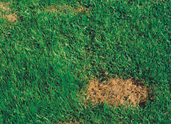 How to Fix the Top 10 Lawn Problems - Consumer Reports