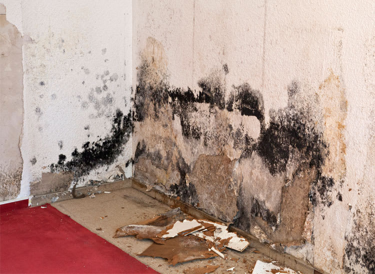 Severe mold damage to a basement wall.