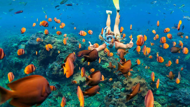 Woman Swimming with reef fish