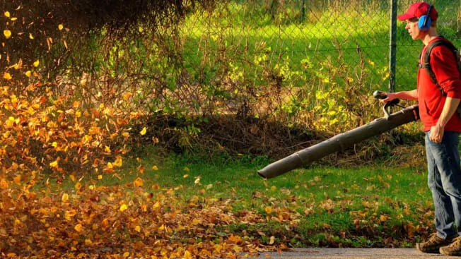 Man cleaning up fall leaves in yard with leaf blower