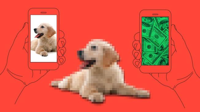 puppy fraud