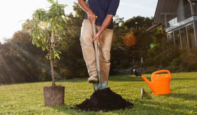 man planting tree house