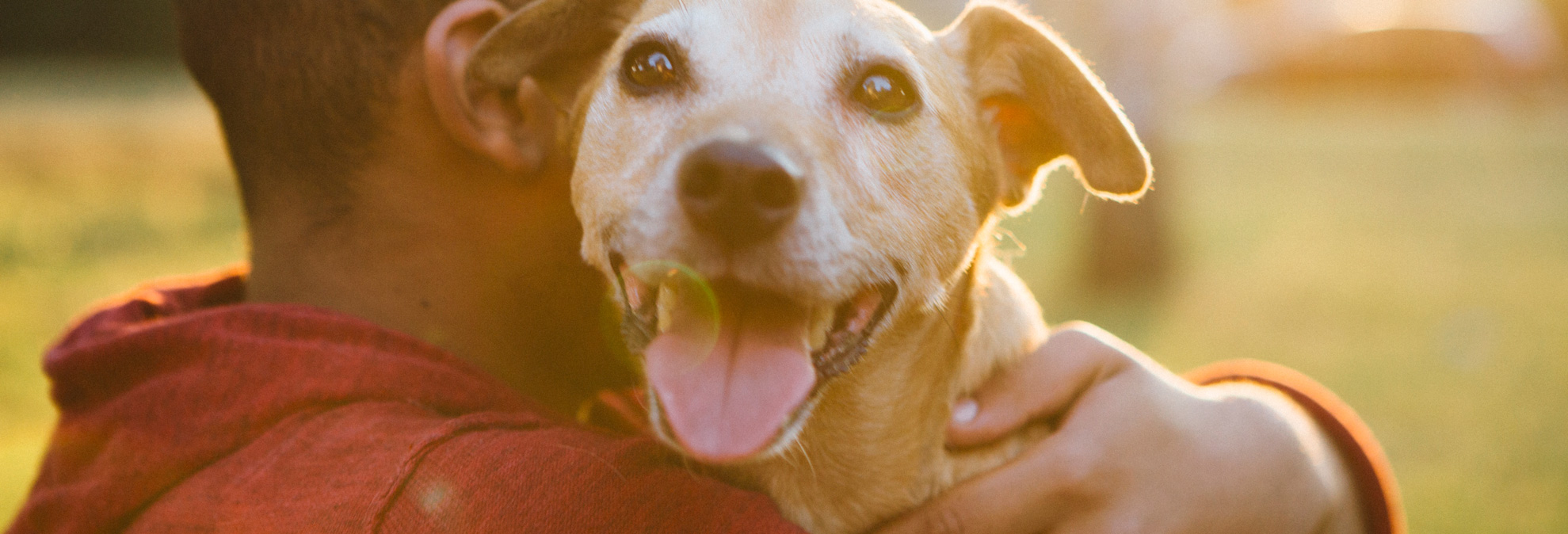 3 Reasons To Celebrate Love Your Pet Day Consumer Reports