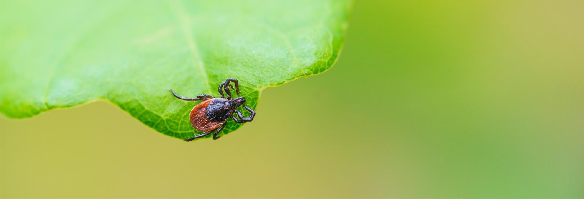 tick traps pesticides and tick borne diseases consumer reports