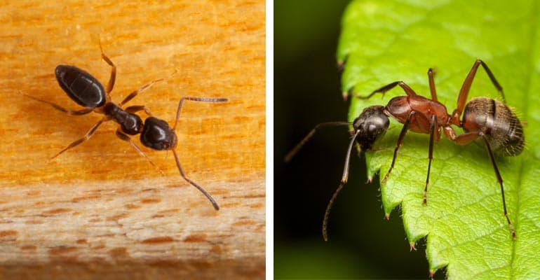 How to Get Rid of Ants - Consumer Reports